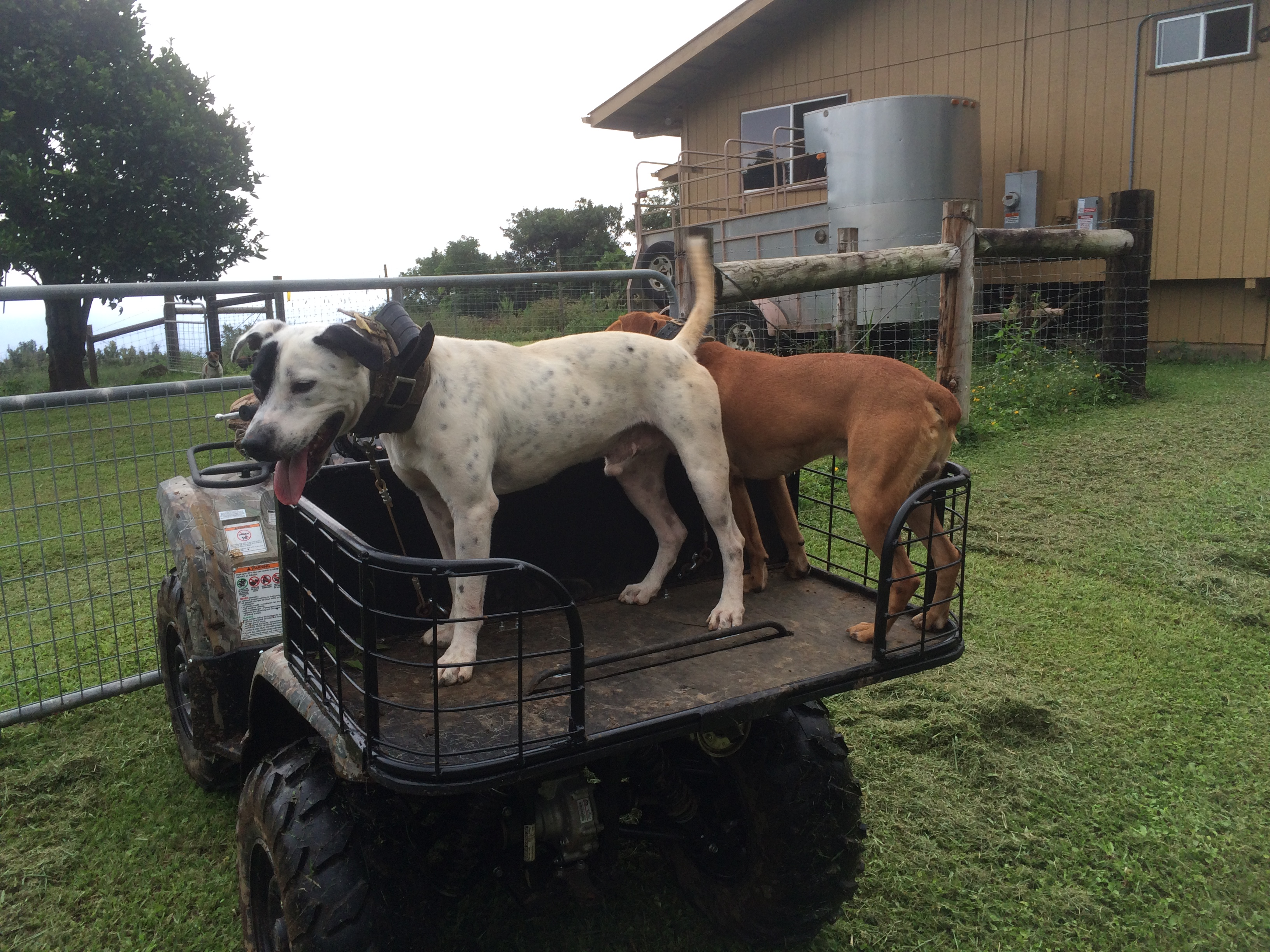 Yamaha Grizzly 450 >> Tried out the new dog rack - Yamaha Grizzly ATV Forum